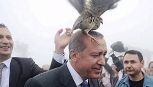 Erdogan_bird_onHead_small.jpg