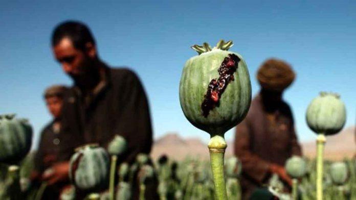 opium-696x392.jpg