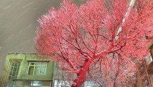 snow_012818.jpg