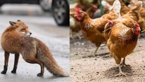 fox_031419.jpg