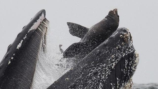 _108111477_whale2.jpg