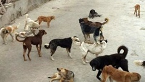 dogs_021520.jpg