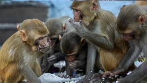monkey_052820.jpg
