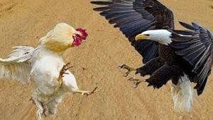 eagle_092220.jpg
