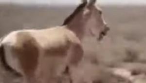 donkey_061421.jpg