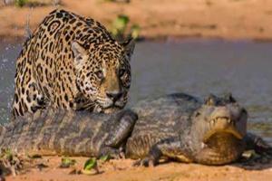 aligator_091721.jpg