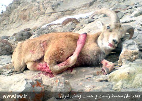 inhumaneWLirn3.jpg